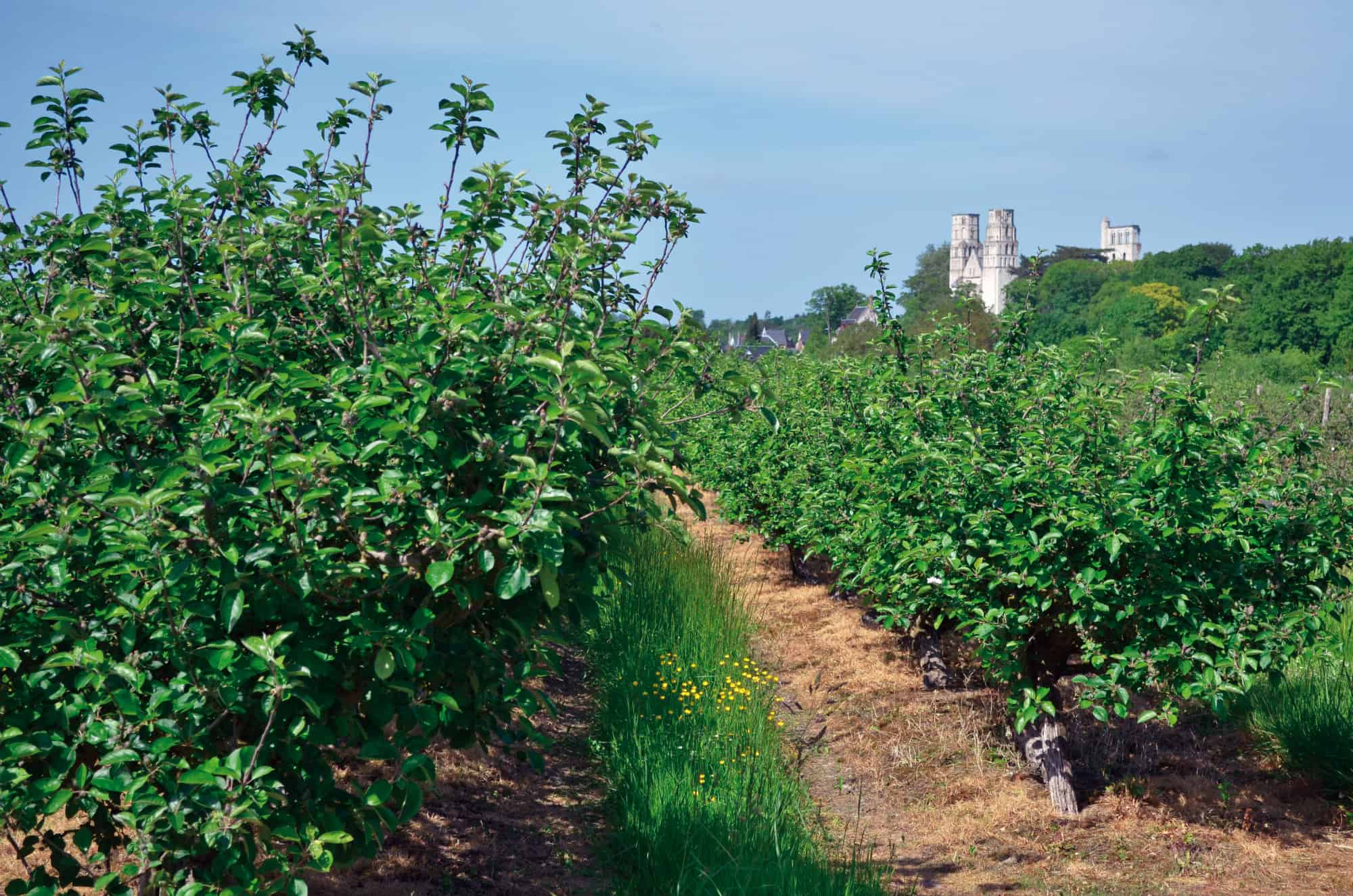 route des fruits normandie