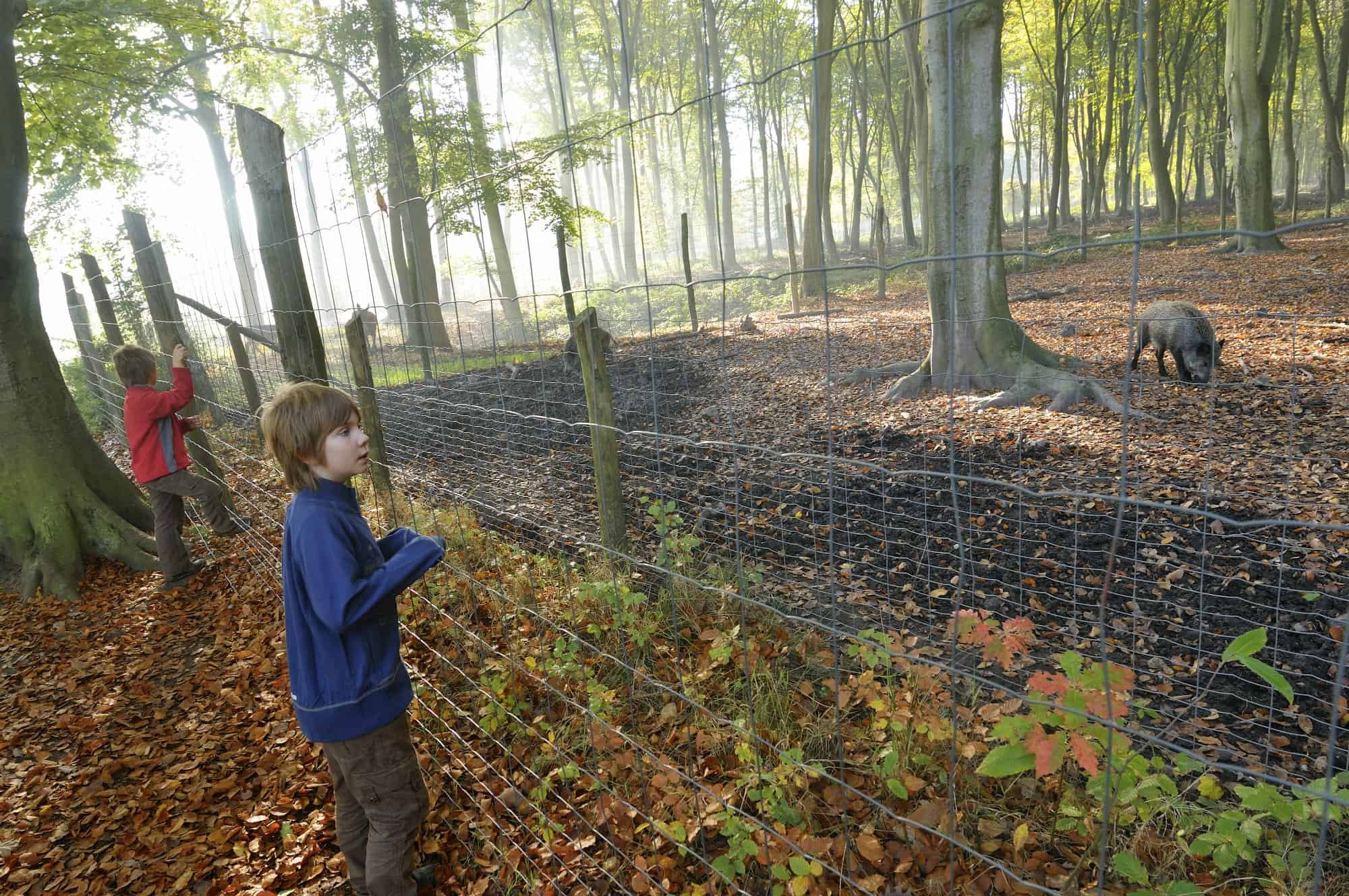 Foret Roumare Article 2
